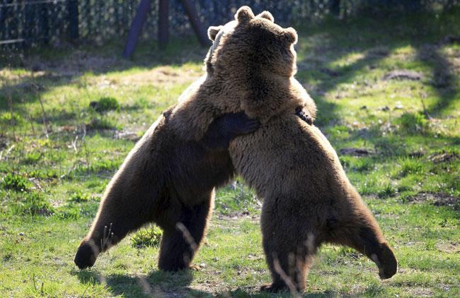 urso_abraco
